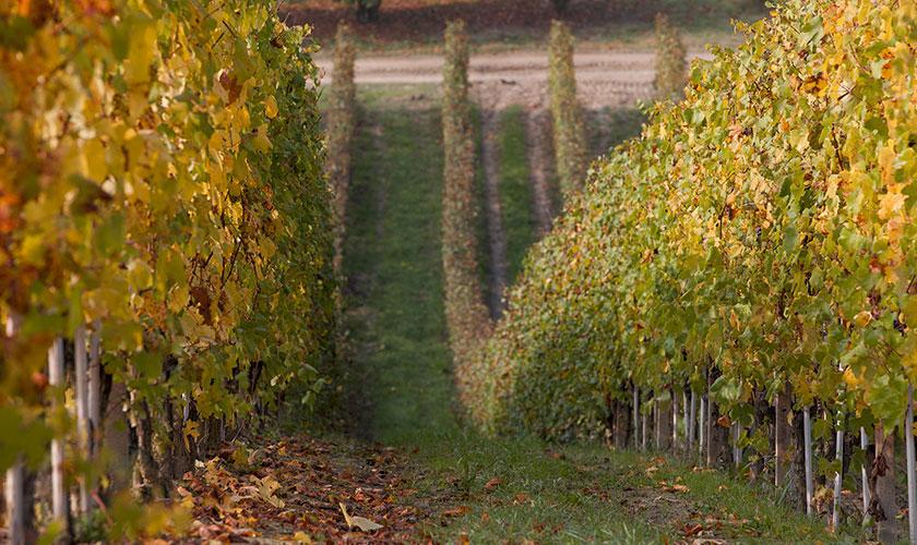 territorio-vigne